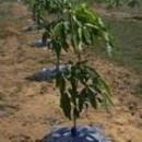 Bầu cây giống hiện đại